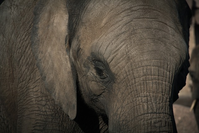 Short Story: The Elephant and The Rope